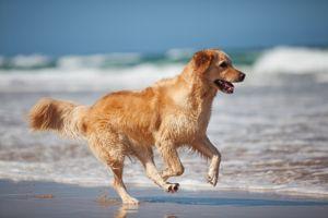 Ostfrieslandurlaub mit Hund
