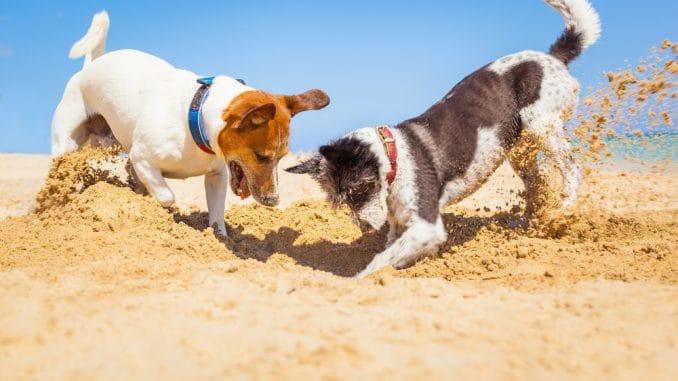 Hundestrand in Norddeich ändert sich